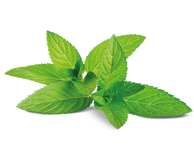 nutritional-benefits-ingredients-mint