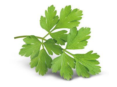 nutritional-benefits-ingredients-parsley