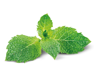nutritional-benefits-ingredients-peppermint